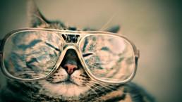 Glad katt med solglasögon